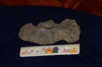 石斧(いしおの・せきふ)2