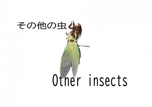 その他の虫