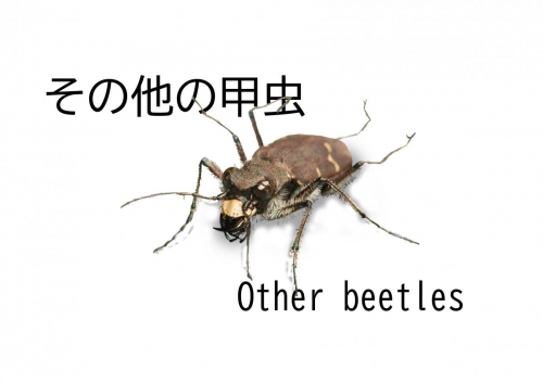 その他甲虫