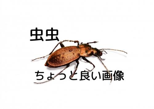 虫虫チョット良い画像